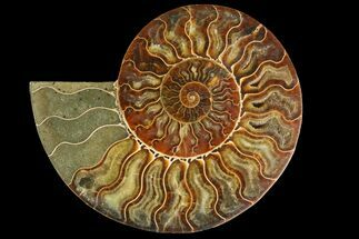 "Buy 5.4"" Agatized Ammonite Fossil (Half) - Madagascar - #135256"