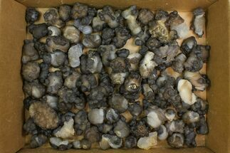 "Buy Wholesale Lot: 1.3 to 3"" Natural Chalcedony Nodules - 100 Pieces - #137959"