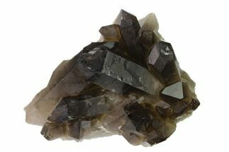 "Buy 4.1"" Dark Smoky Quartz Crystal Cluster - Brazil - #137830"