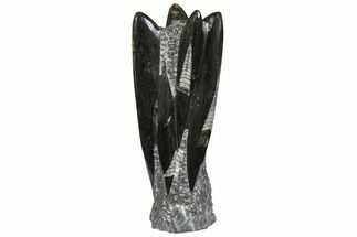 "7.9"" Tall Tower Of Polished Orthoceras (Cephalopod) Fossils For Sale, #138374"