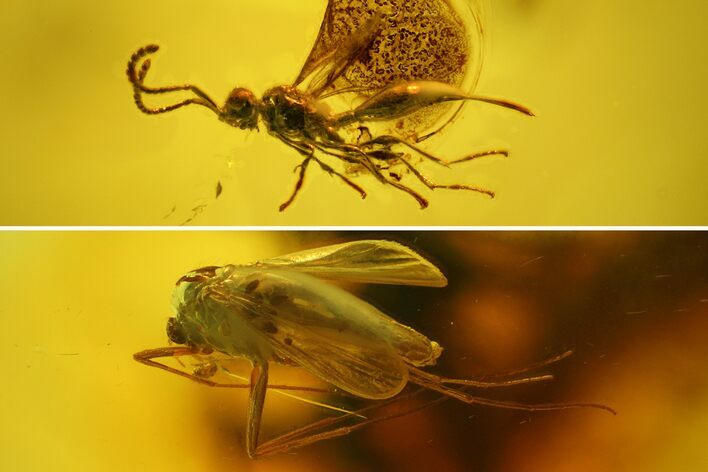 Large Fossil Flies (Diptera) and a Wasp (Hymenoptera) in Baltic Amber