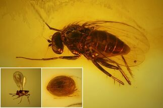 Detailed Fossil Fly, Beetle and Wasp in Baltic Amber For Sale, #139076