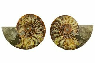 "Buy 6.9"" Agatized Ammonite Fossil (Pair) - Madagascar - #135277"