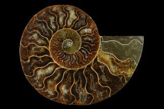 "Buy 4.3"" Agatized Ammonite Fossil (Half) - Madagascar - #139687"