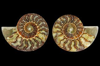 "4.45"" Agatized Ammonite Fossil (Pair) - Madagascar For Sale, #139727"