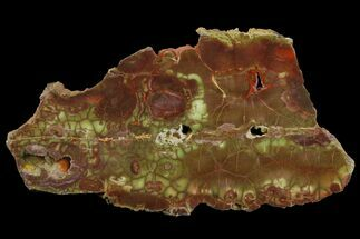 Rhyolite - Fossils For Sale - #141162