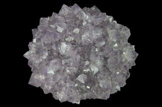"1.8"" Amethyst Rosette - Artigas, Uruguay For Sale, #141902"