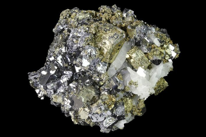 "2.3"" Chalcopyrite, Pyrite, Galena and Quartz Association - Peru"