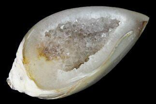 "1.21"" Chalcedony Replaced Gastropod With Druzy Quartz - India For Sale, #142260"