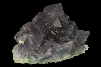 Fluorite - Fossils For Sale - #142371