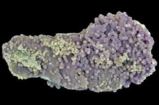 "Buy 8.1"" Sparkly, Botryoidal Grape Agate - Indonesia - #141688"