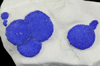Azurite - Fossils For Sale - #142782