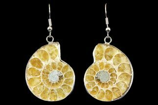 Buy Fossil Ammonite Earrings - 110 Million Years Old - #142873