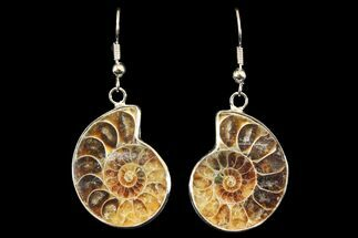 Fossil Ammonite Earrings - 110 Million Years Old For Sale, #142877