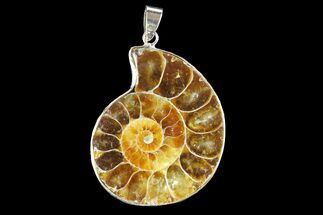 "1.55"" Fossil Ammonite Pendant - 110 Million Years Old For Sale, #142907"