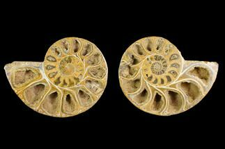 "3.9"" Cut & Polished Agatized Ammonite Fossil (Pair)- Jurassic For Sale, #131675"
