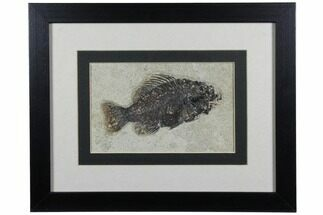 "Buy 4.5"" Framed Fossil Fish (Cockerellites) - Wyoming - #143764"
