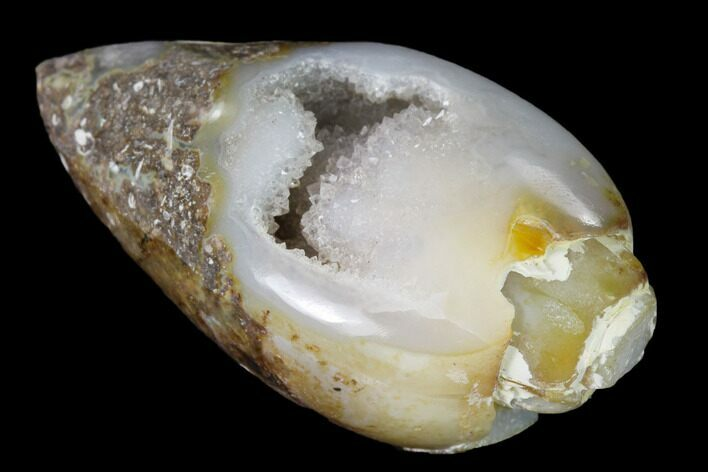 "1.31"" Chalcedony Replaced Gastropod With Druzy Quartz - India"