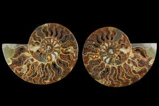 "Buy 6.05"" Agatized Ammonite Fossil (Pair) - Crystal Pockets - #144103"