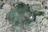 "6.1"" Blue-Green Fluorite on Sparkling Quartz - China - #147031-2"