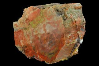 "5.8"" Wide, Polished Petrified Wood (Araucarioxylon) Section - Arizona For Sale, #147857"