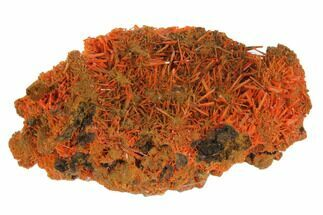 Crocoite - Fossils For Sale - #147978