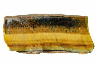 "3.8"" Polished Tiger's Eye Section - South Africa For Sale, #148244"