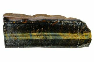 "4.6"" Polished Tiger's Eye Section - South Africa For Sale, #148277"
