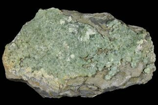 "13.3"" Green Prehnite Crystal Cluster on Rock - Morocco For Sale, #127505"