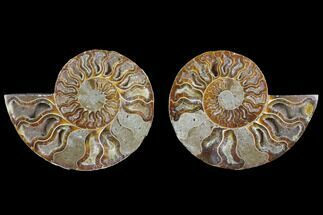 "Buy 3.7"" Agatized Ammonite Fossil (Pair) - Crystal Filled Chambers - #145816"