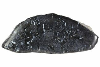 "Buy 4.5"" Polished, Black Petrified Palm Root - Indonesia - #150097"
