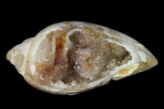 "1.59"" Chalcedony Replaced Gastropod With Druzy Quartz - India For Sale, #150182"
