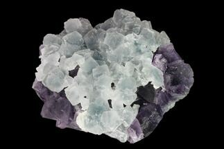 "3.8"" Green Fluorite Over Purple Octahedral Fluorite - Fluorescent! For Sale, #149678"