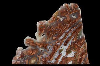 "Buy 5.4"" Polished Wyoming Youngite Agate/Jasper Slab - Fluorescent - #152116"