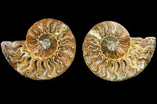 "3.3"" Agate Replaced Ammonite Fossil (Pair) - Madagascar For Sale, #145898"