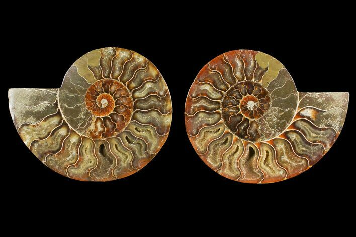 "4.6"" Agate Replaced Ammonite Fossil (Pair) - Madagascar"