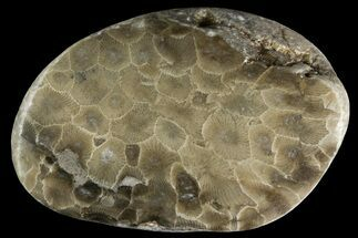 Hexagonaria percarinata - Fossils For Sale - #156132