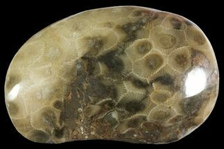 "2.7"" Polished Petoskey Stone (Fossil Coral) - Michigan For Sale, #156101"
