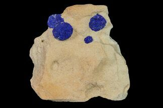 Azurite - Fossils For Sale - #155658