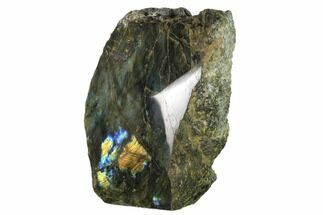 "Buy 7.6"" Tall, Single Side Polished Labradorite - Madagascar - #154222"