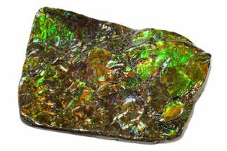 "3.55"" Iridescent Ammolite (Fossil Ammonite Shell) - Alberta, Canada For Sale, #156848"