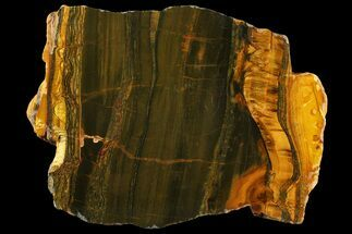 "Buy 7.7"" Polished ""Packsaddle"" Tiger Eye Slab - Western Australia - #158158"