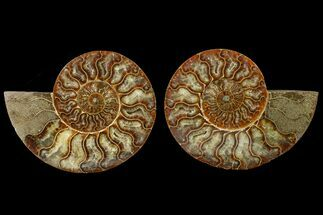 "Buy 5.65"" Agate Replaced Ammonite Fossil (Pair) - Madagascar - #158320"
