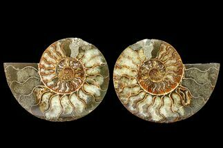 "Bargain, 5.2"" Agate Replaced Ammonite Fossil (Pair) - Madagascar For Sale, #158333"