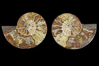 "4.3"" Agatized Ammonite Fossil (Pair) - Madagascar For Sale, #148034"