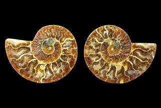 "Buy 4.7"" Agate Replaced Ammonite Fossil (Pair) - Madagascar - #150931"