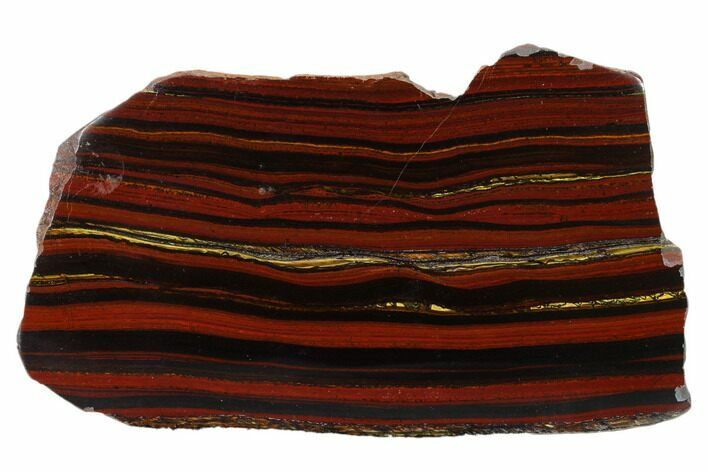 "6.3"" Polished Tiger Iron ""Stromatolite"" Slab - 3.02 Billion Years"