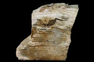 "5.3"" Polished Petrified Wood Stand-up - Sweethome, Oregon For Sale, #162882"