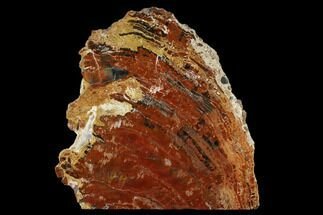 "Buy 12.4"" Black and Red Petrified Wood (Araucarioxylon) Stand-up - Arizona - #162913"