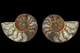"4.2"" Agate Replaced Ammonite Fossil (Pair) - Madagascar For Sale, #166748"